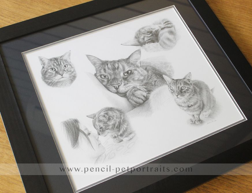 Framed pencil pet portrait in Albany Onyx | Pet Portraits Pencils ...