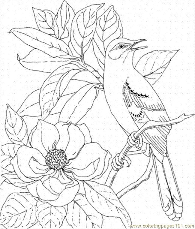 Pin By Suz Rangel On Adult Coloring Images Bird Coloring Pages Flower Coloring Pages Coloring Pages