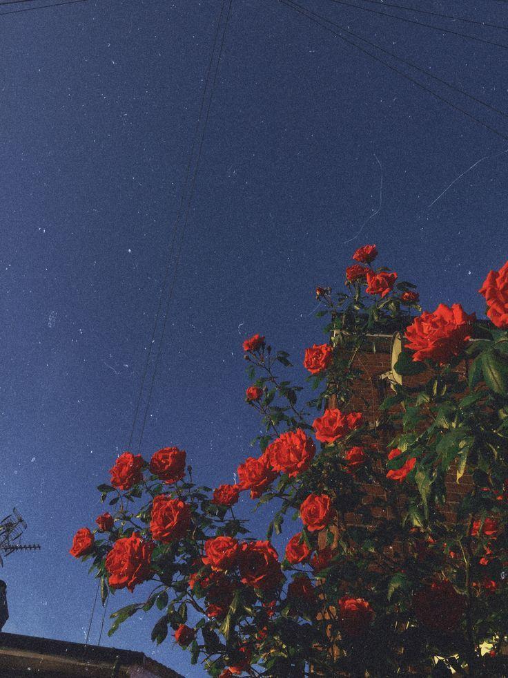 sunlit blooms i see summer