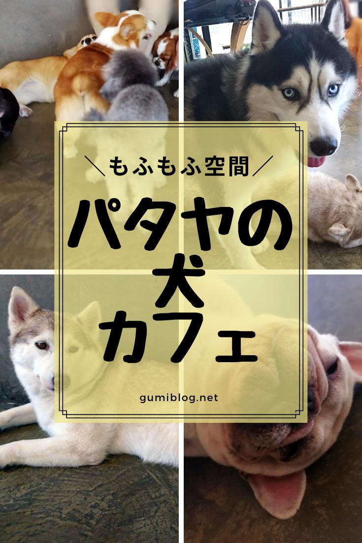 タイのパタヤの犬カフェ Hong Hong Dog Cafe ホンホンドッグカフェ ドリンク付き150 で楽しめる 犬 パタヤ タイ 観光