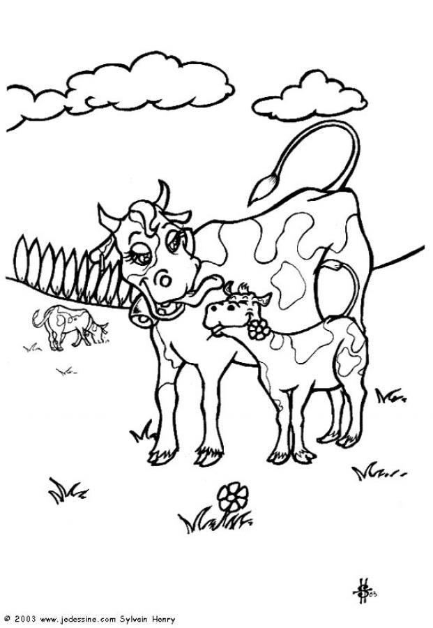 Coloriage d une maman vache avec son petit veau un coloriage sur les animaux de la ferme pour - Coloriage petit veau ...