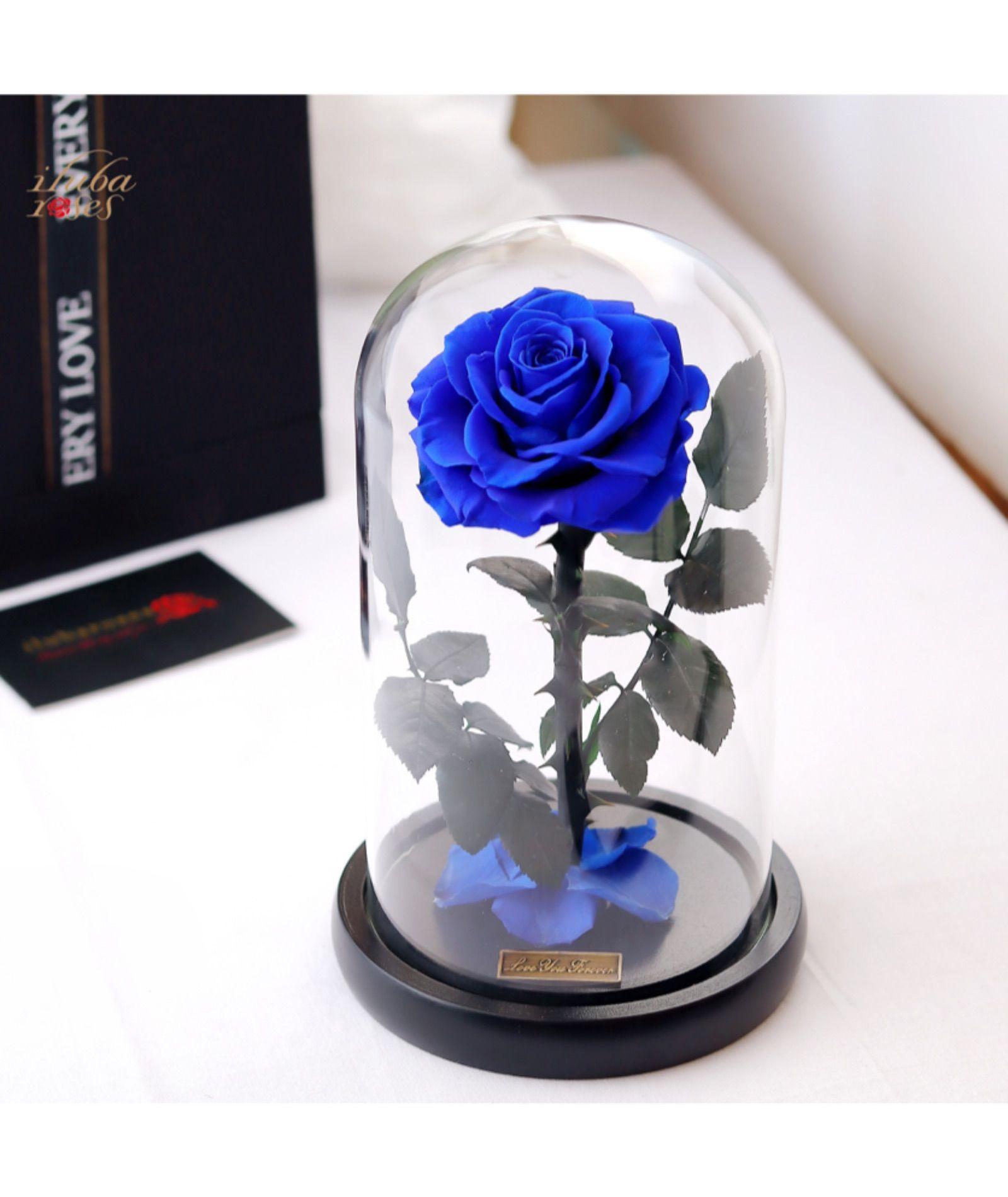 ورد ازرق دائم طبيعي محفوظ ثلاثية Gifts Rose Gift Flower Delivery