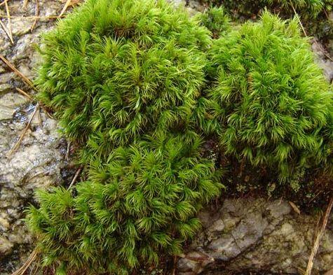 Propagating Moss In A Blender Garden Help Vegtable Garden