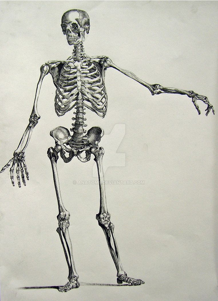 Project for Figure Drawing in which we had to do a skeleton by ...