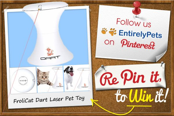 1 Follow Entirelypets On Pinterest 2 Repin This Photo For A Chance To Win A Frolicat Dart Laser Pet Toy Http Www Ent Pets Pet Toys Online Pet Supplies