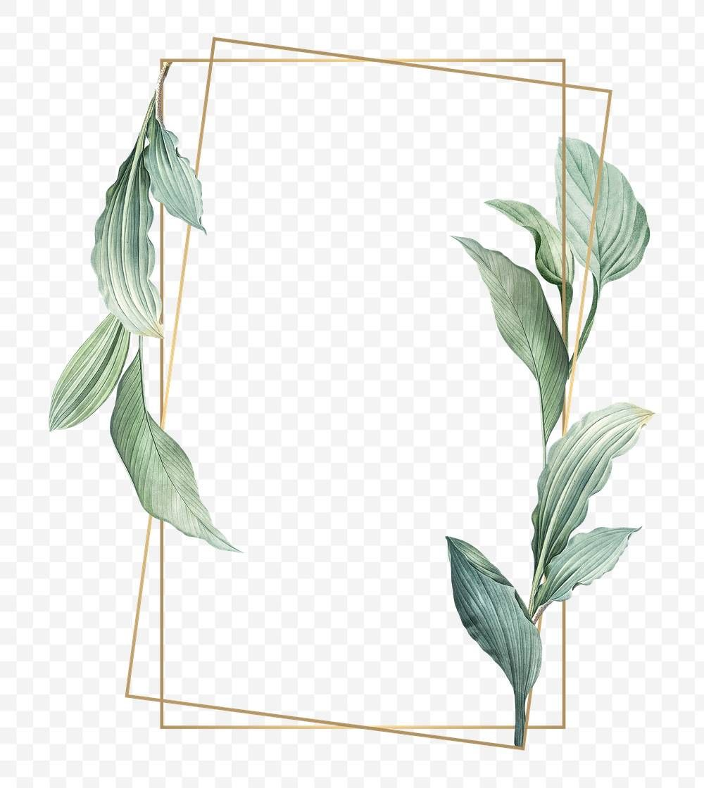 Gold Frame Decorated With Hand Drawn Tropical Leaves Poster Transparent Png Free Image By Rawpixel Com Free Hand Drawing Tropical Leaves How To Draw Hands