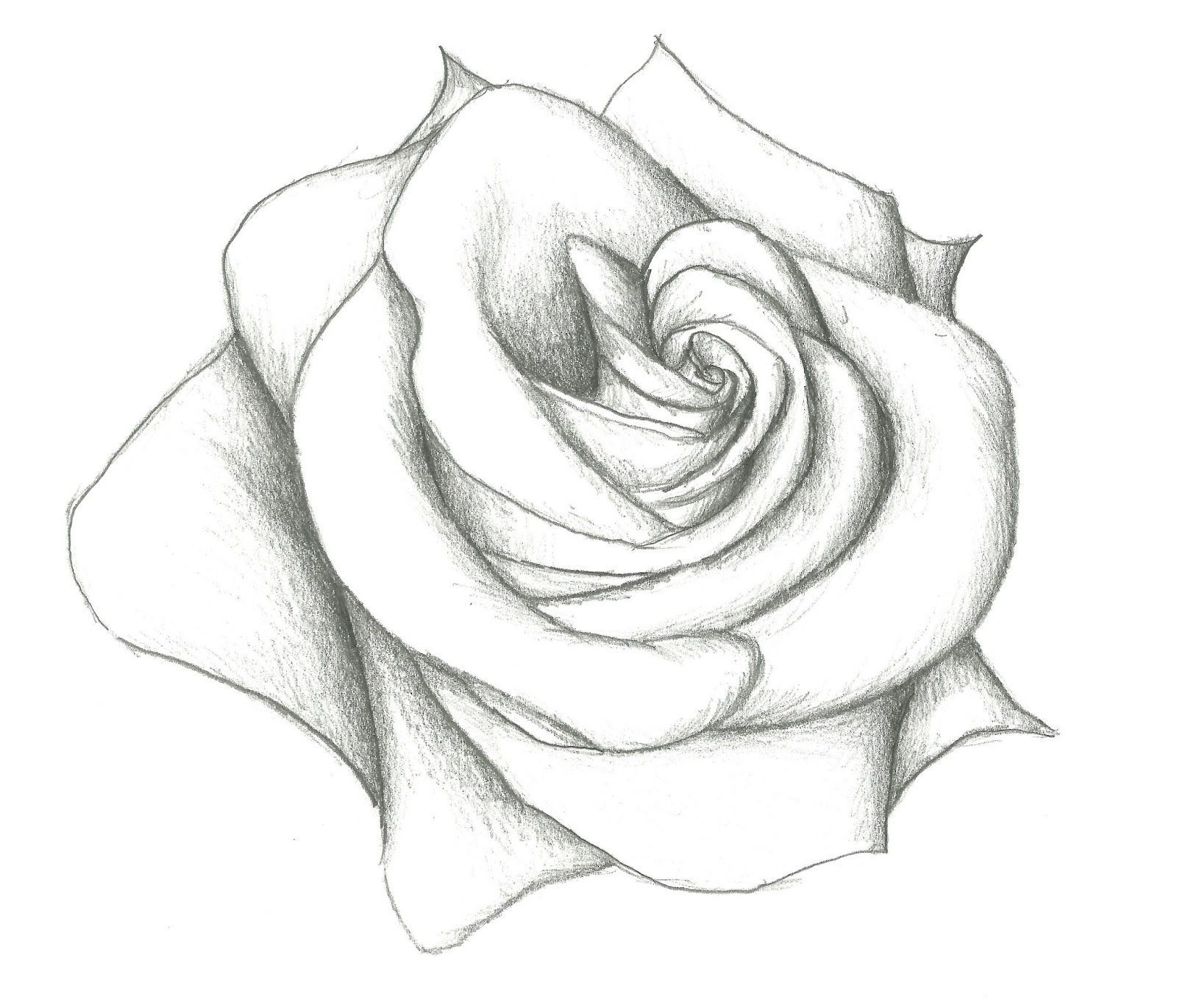Rose Flower Drawings In Pencil Step By Step Easy Pencil