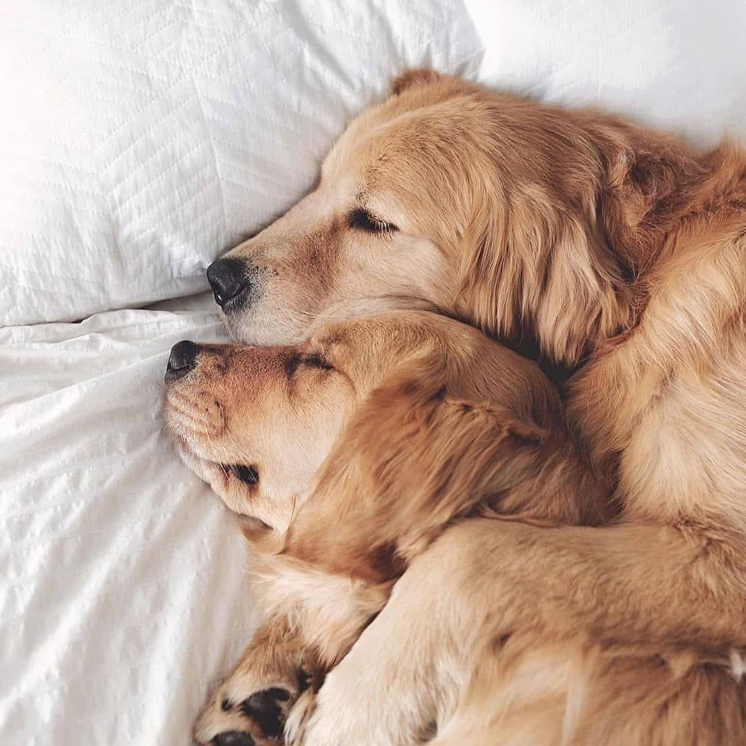 Follow Us For More Puppies Memes And Photos Dogs Hug