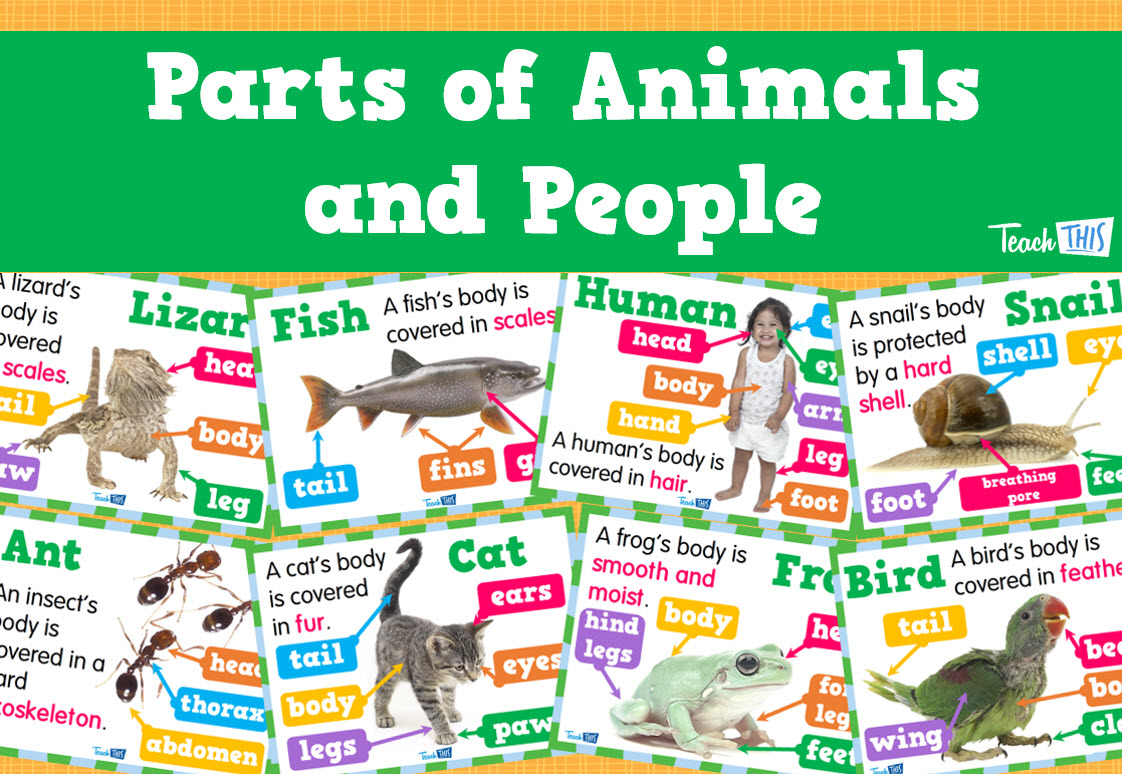 Parts of Animals and People | School | Pinterest | People ...