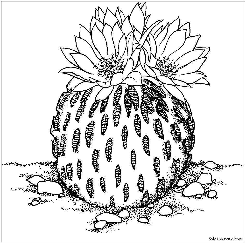 Pelecyphora Aselliformis Or Peyotillo Cactus Coloring Page ...  Cactus Flower Outline