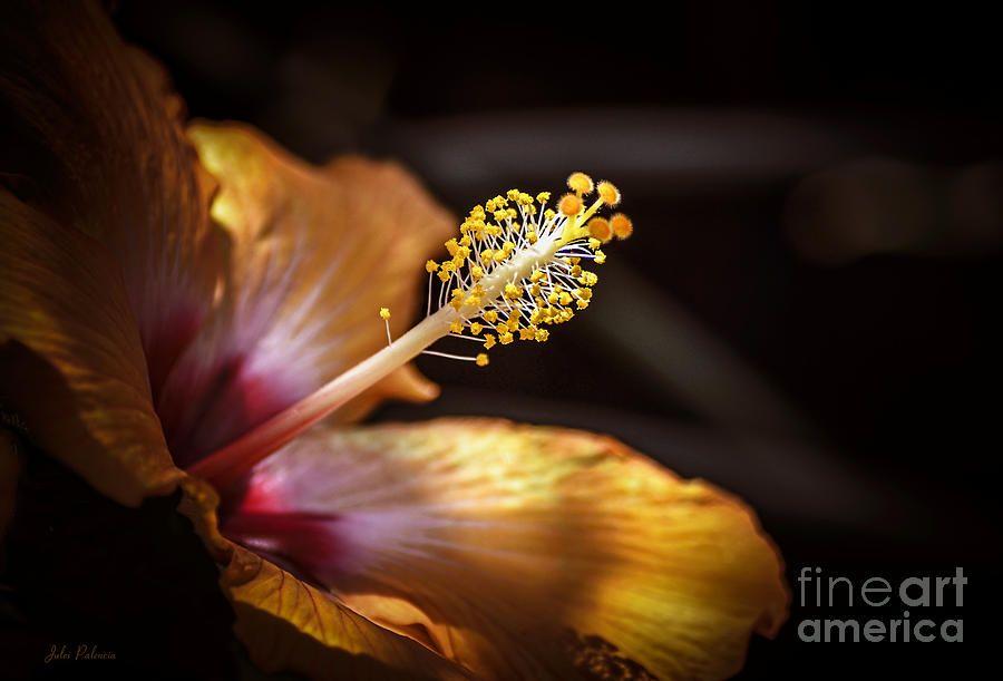 Hibiscus Macro Photograph