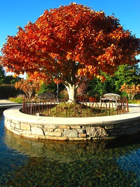 NC Arboretum, Asheville