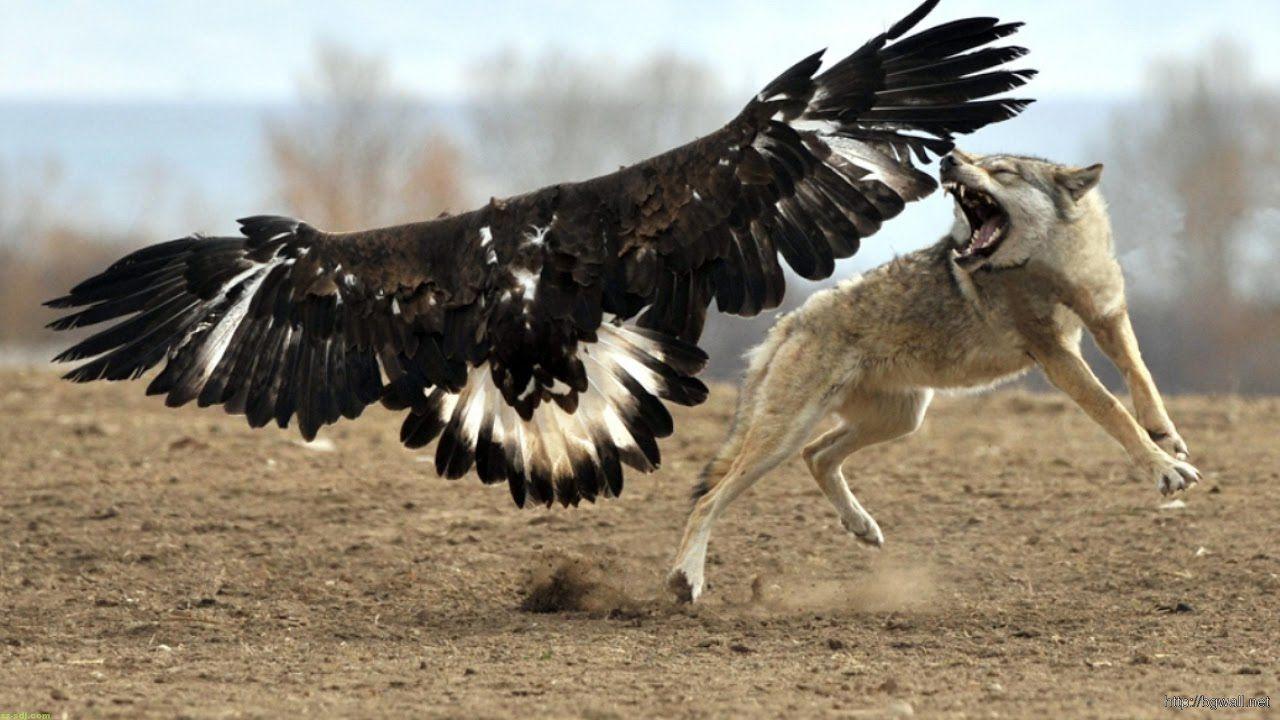 Картинка волк и птичка