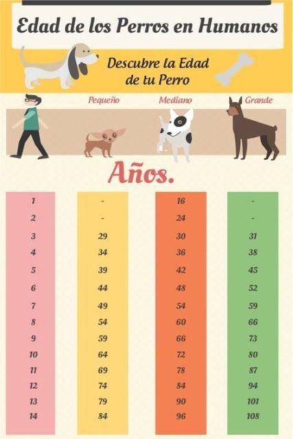 12 Ideas De Perros En 2021 Perros Lenguaje De Los Perros Cuidar Animales