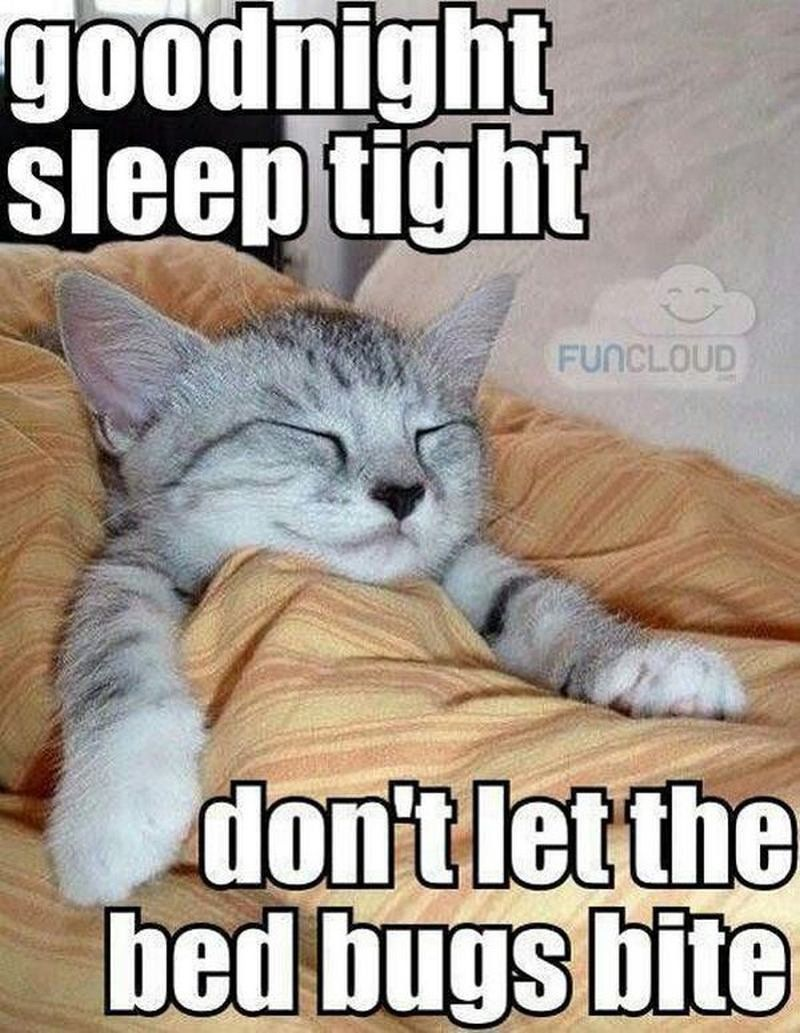 Good Night Meme Cute : night, Night, Memes, Funny, Goodnight, Wishes, Funny,