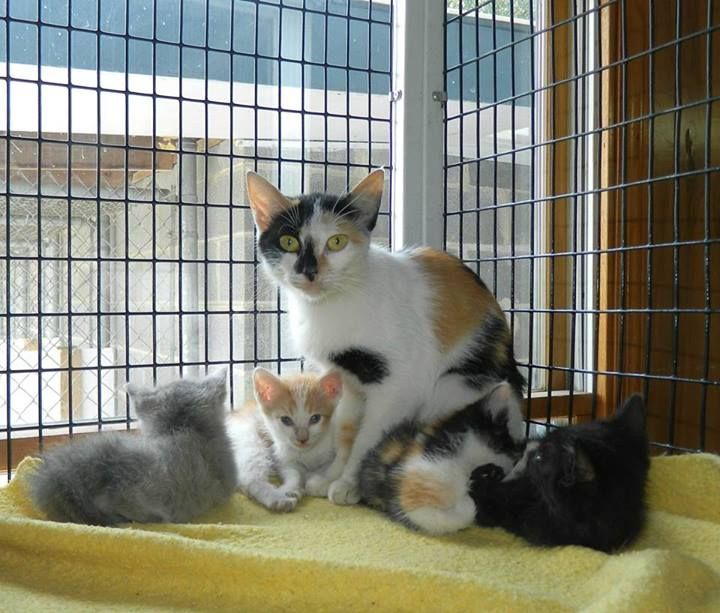 Allie Is A Beautiful Calico Cat With Four Kittens In Desperate Need Of A Rescue Chattooga Co Ac Summervill Cat Adoption No Kill Animal Shelter Animal Shelter