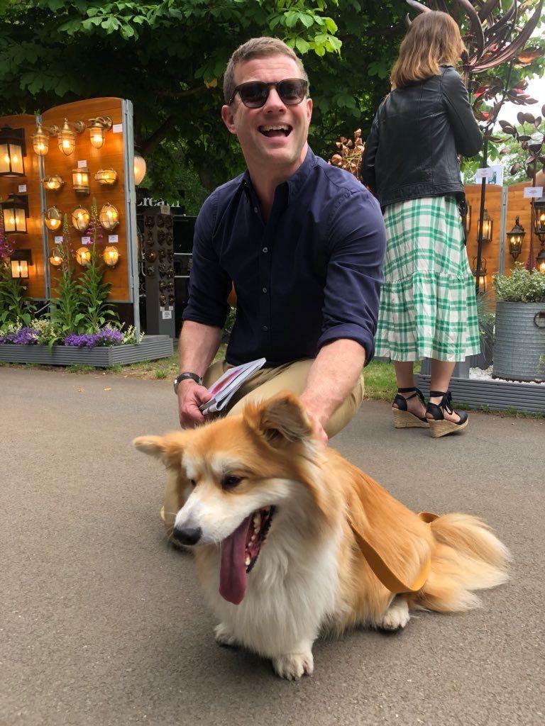 Marcel Le Corgi Corgi Dogs Terrier