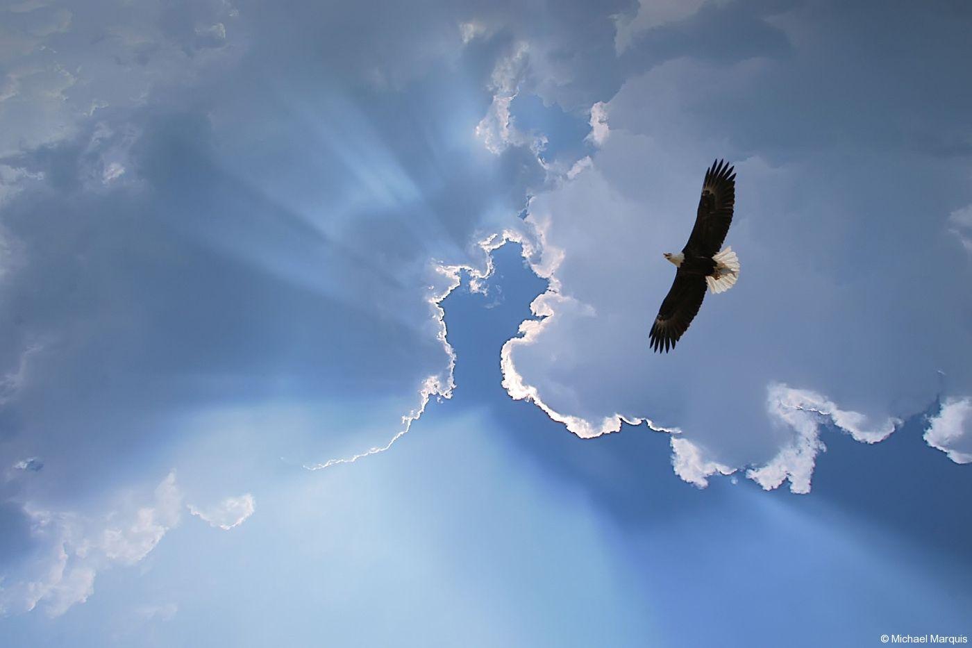 Открытка высокого полета, ладошки день матери