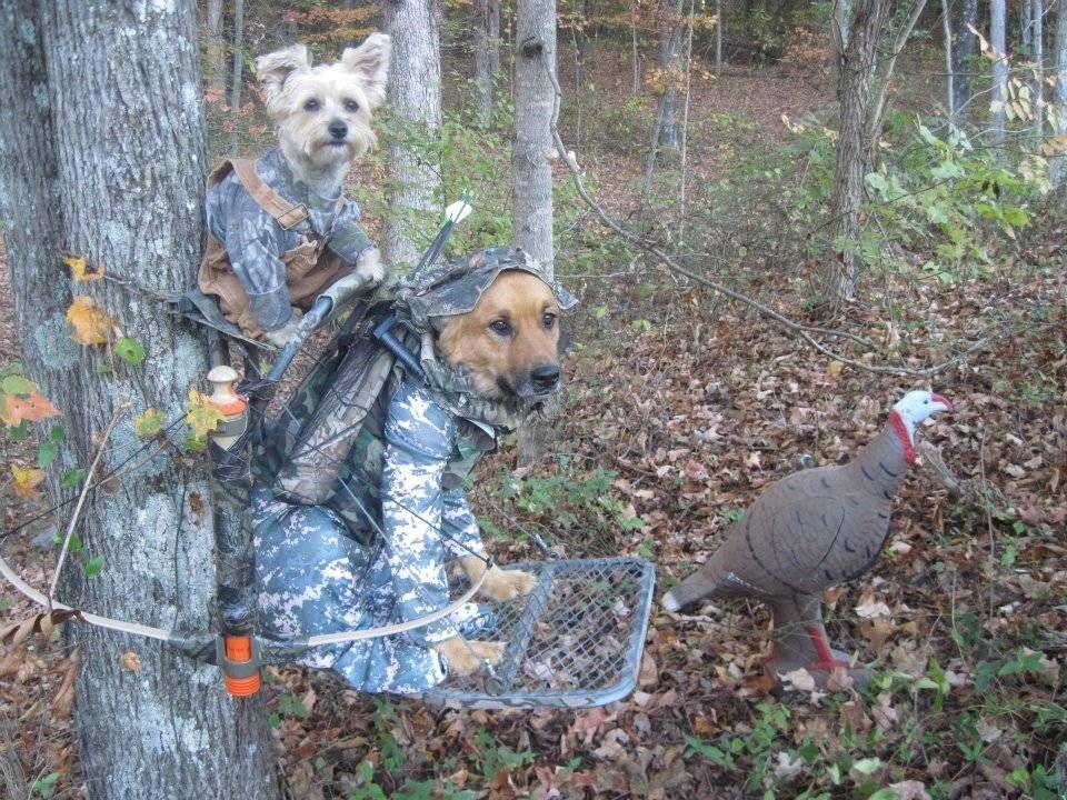 Pet Costumes The Weirdest Halloween Animals Of 2011 Pet Parade
