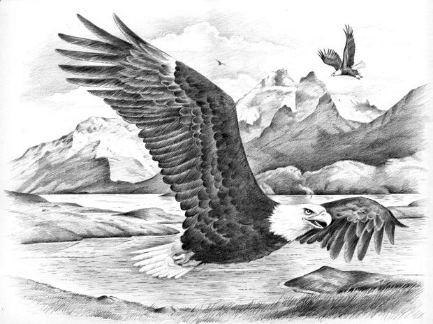 flying eagle sketch - Google Search | pyrography ...