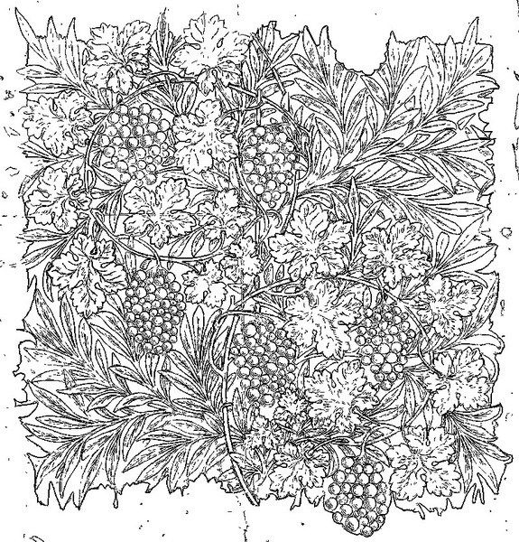Free coloring page / William Morris ウィリアム・モリスの塗り絵① ...
