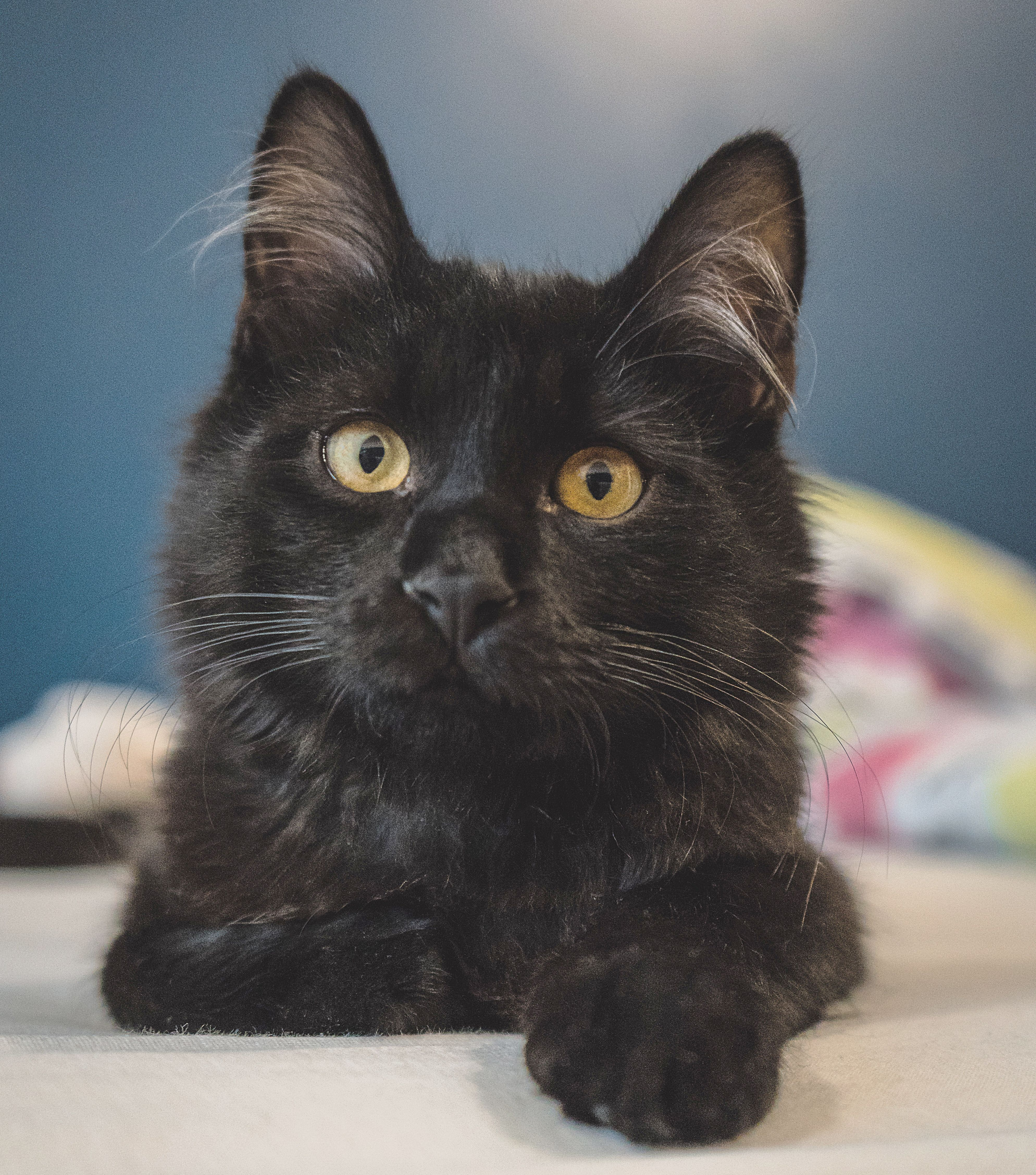 Its National Cat Day We Love Black Cats Especially In October Thank You For Sharing Andrazlazic Com National Cat Day Animals Cats