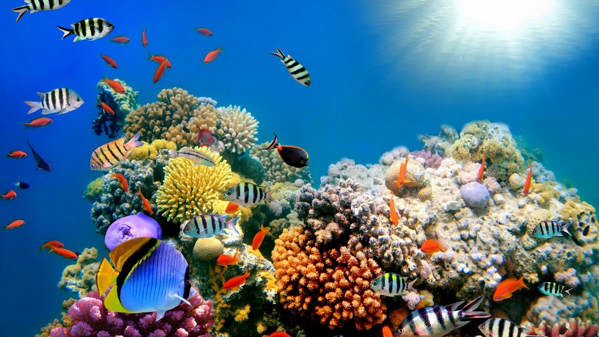 Hd wallpaper quality - Colorful Fish Sea Creature High Quality Hd Wallpapers Hd Famous 1920 1080 Sea Animals Pictures