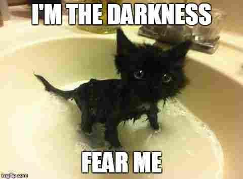 Funny Cat Memes Dump 2018 54 Pictures Ladnow Cute Funny Animals Funny Animal Memes Funny Animals