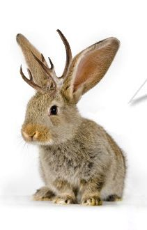 Adopt a Jackalope Today! Dexter charming, Character
