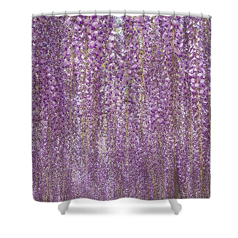 Purple Flowers Of Japanese Wisteria Shower Curtain For Sale By Ellie Teramoto Purple Flowers Wisteria Curtains For Sale