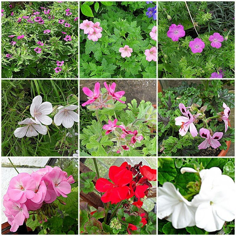 Name All Types Flowers Different Types Of Flowers And Their Names