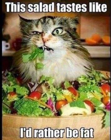 Diet meme humor awesome 29 ideas for 2019 -   13 diet Meme hilarious ideas