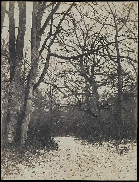 Eugène Cuvelier   [Fontainebleau Forest]   The Met - #cuvelier #eugene #fontainebleau #forest - #WoodblockPrint