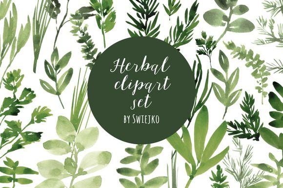 Watercolor Herbs set by swiejko on Creative Market