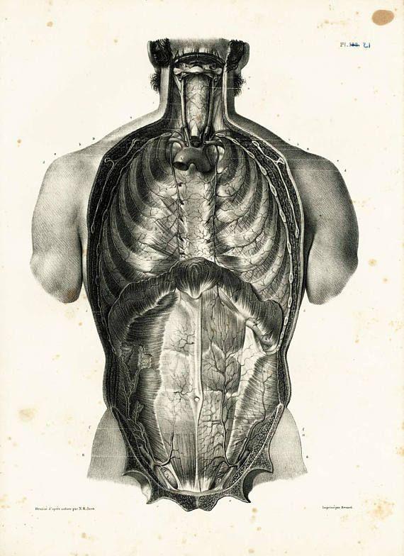 1831 Antique Thorax Print Human Trunk Anatomy Illustration Poster Bourgery Medicine Wall Art Medecine Diaphragme