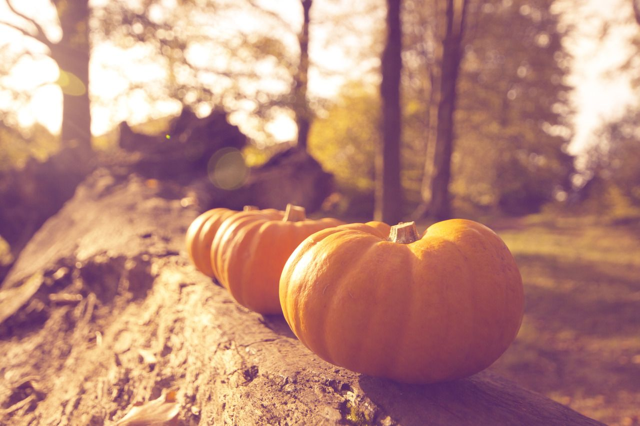 Things I'm Looking Forward To About Fall