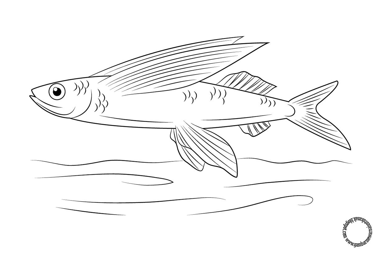 Gambar Mewarnai Ikan Terbang Untuk Anak Dengan Gambar