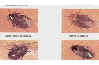 How To Tell If You Have Bed Bugs Or Fleas Insect Spray Bed Bugs