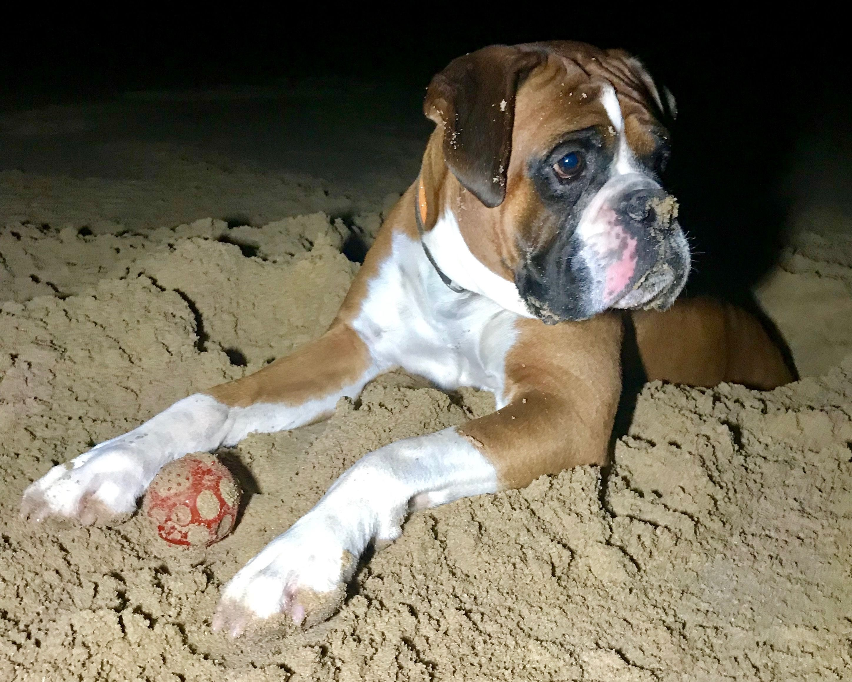 Pin On Hen Ike Two Happy Boxer Dogs
