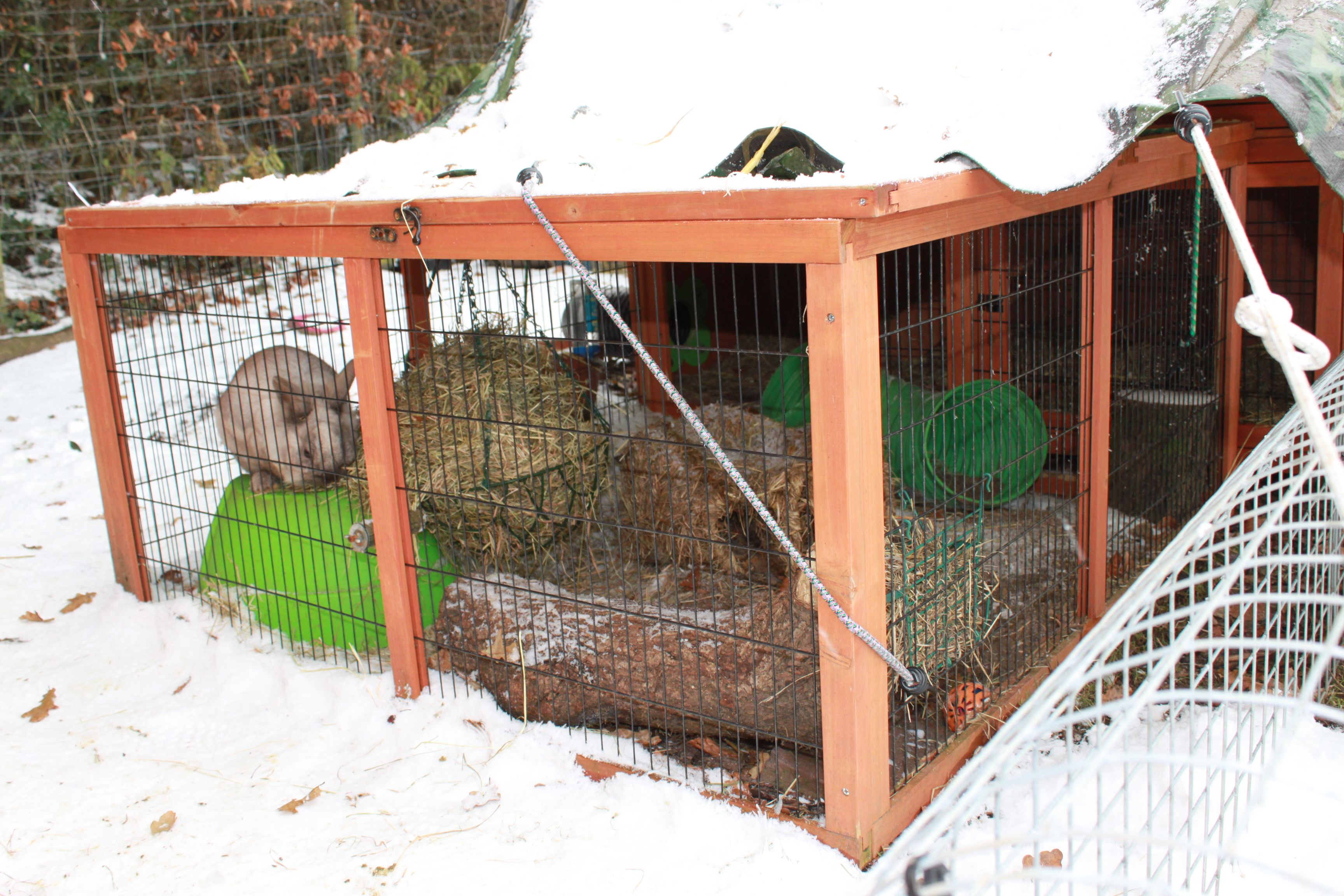 Can rabbits live outside in winter?