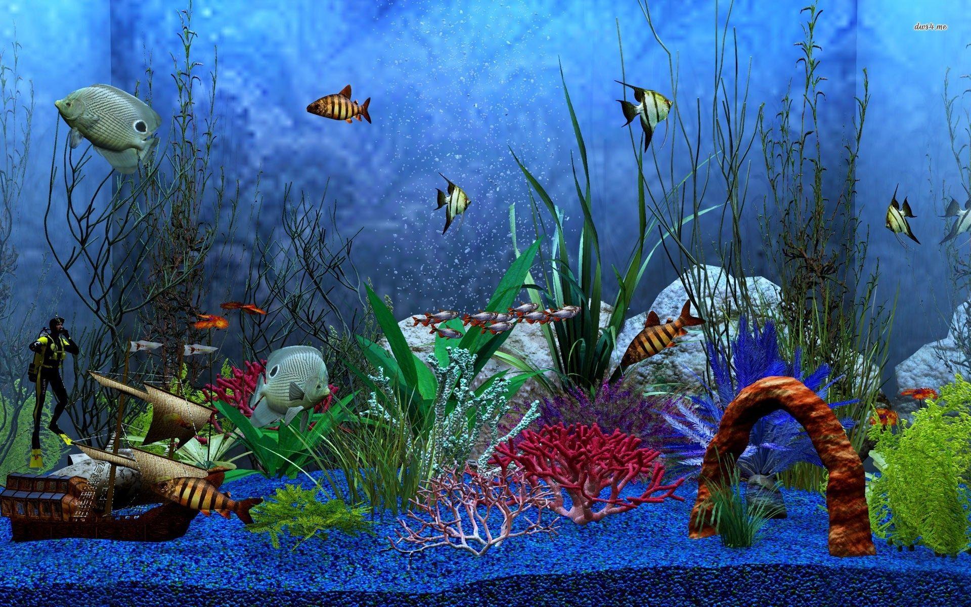 Cool Aquariums Undefined Aquarium Wallpapers 38 Wallpapers Adorable