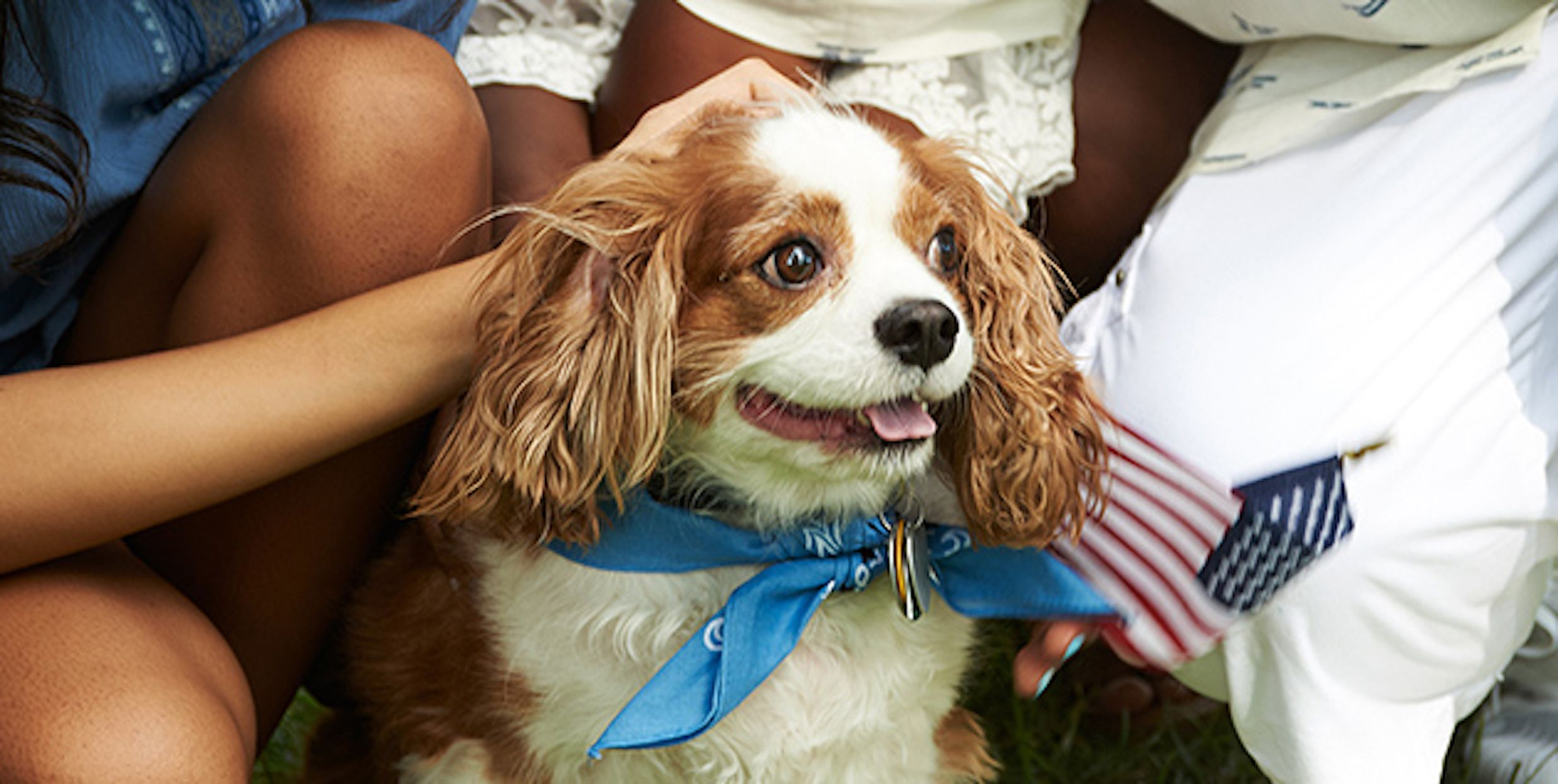 How to calm stressed pets during fireworks according to a