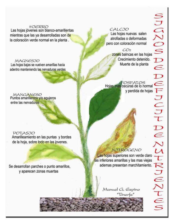 Resultado de imagen para jardin plagas plantas puntos for Hongos en las plantas de jardin