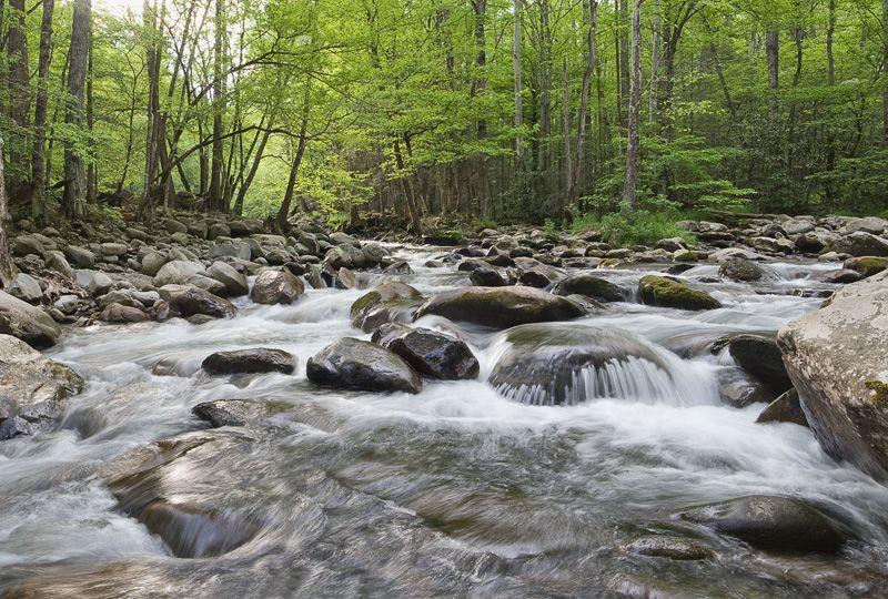 Smoky Mountain Pictures Smoky Mountain Creek In Springtime