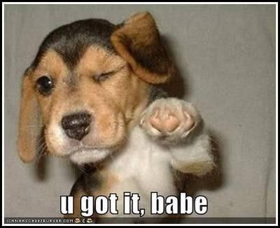 Funny Gag Picture Of A Puppy Dog Winking And Giving Out Its Fist