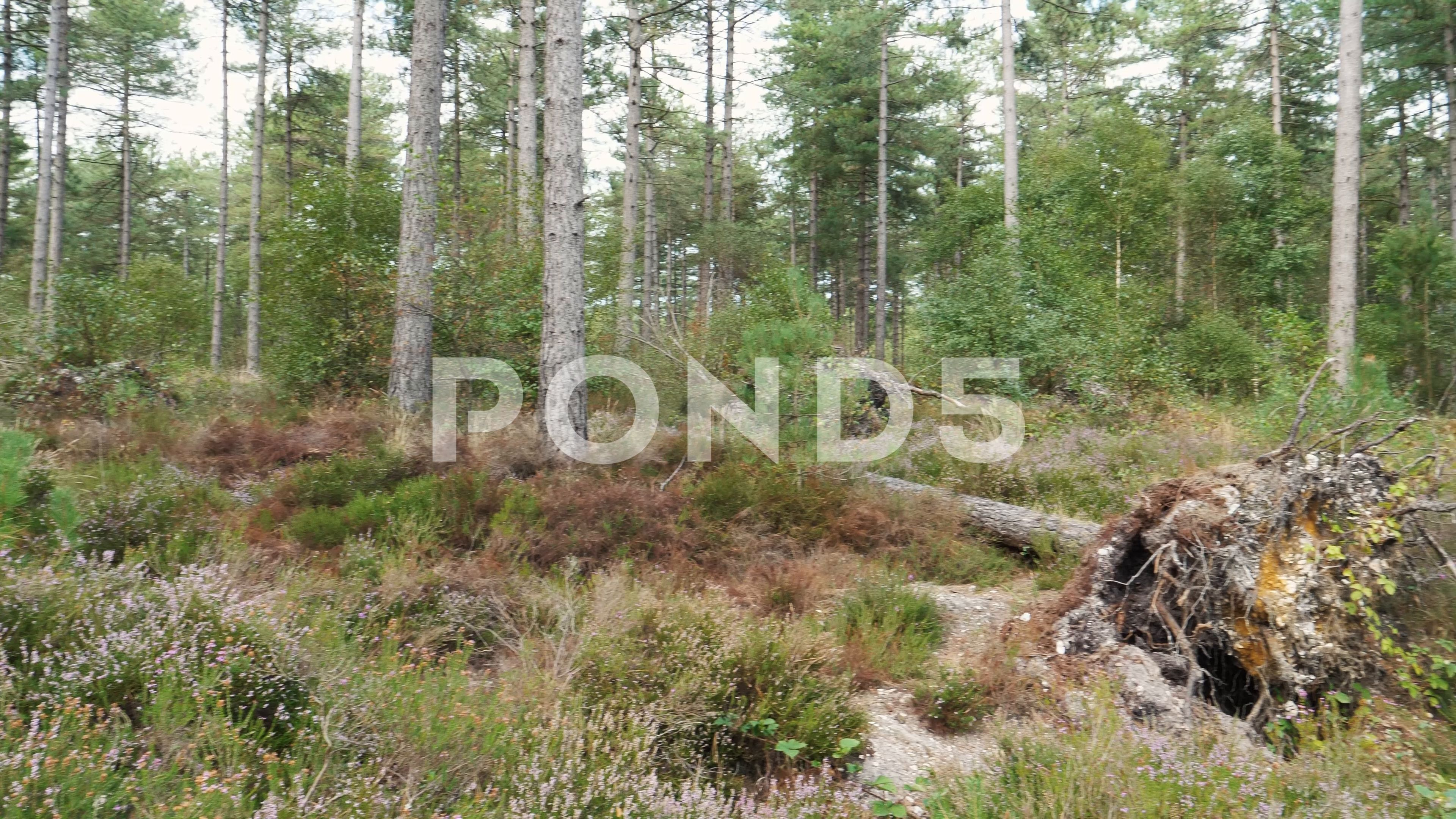 Woodland With Fallen Tree Nature Stock Footage Ad Tree Fallen Woodland Footage Autumn Trees Nature Woodland