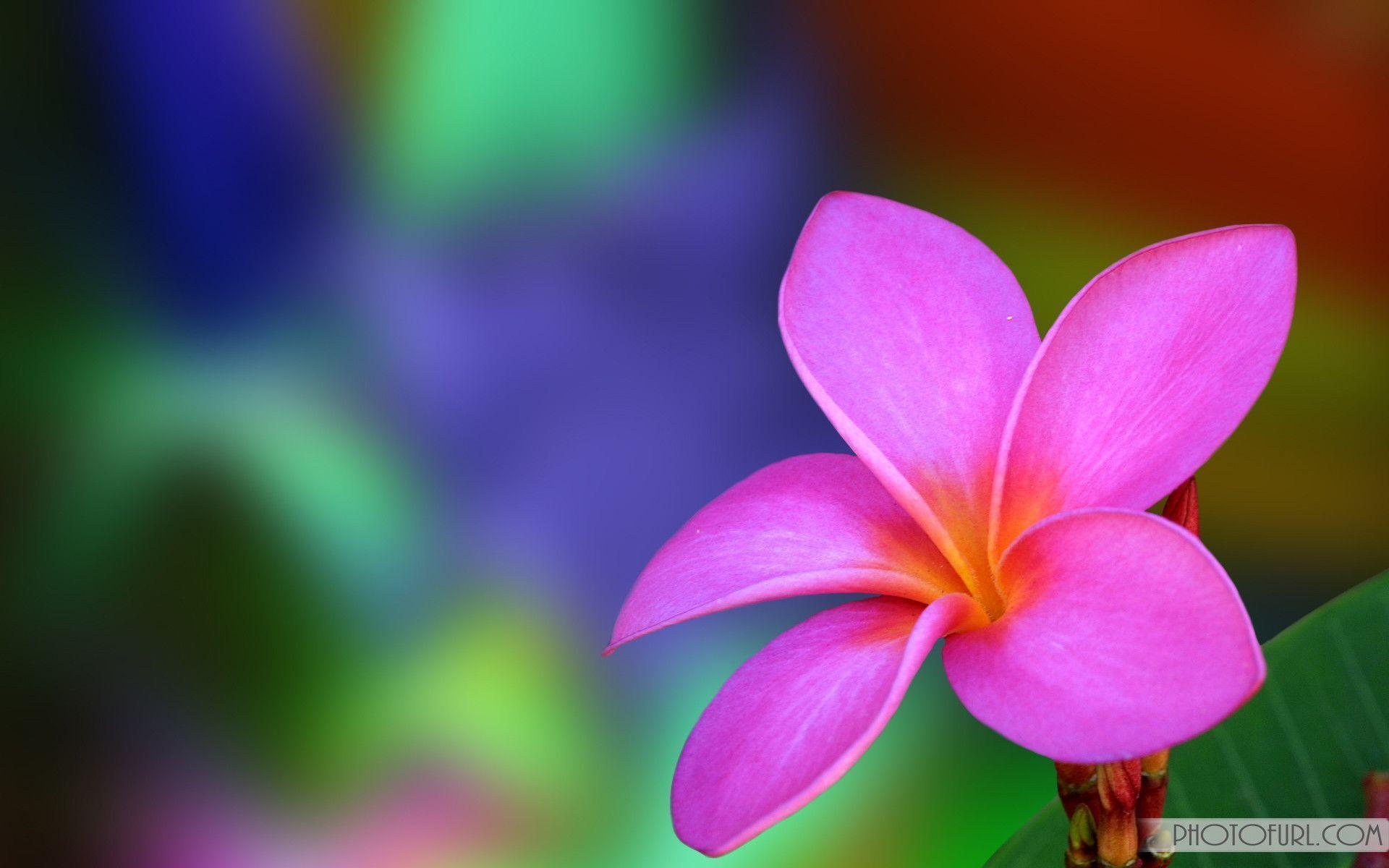 Permalink to Computer Flower Wallpaper
