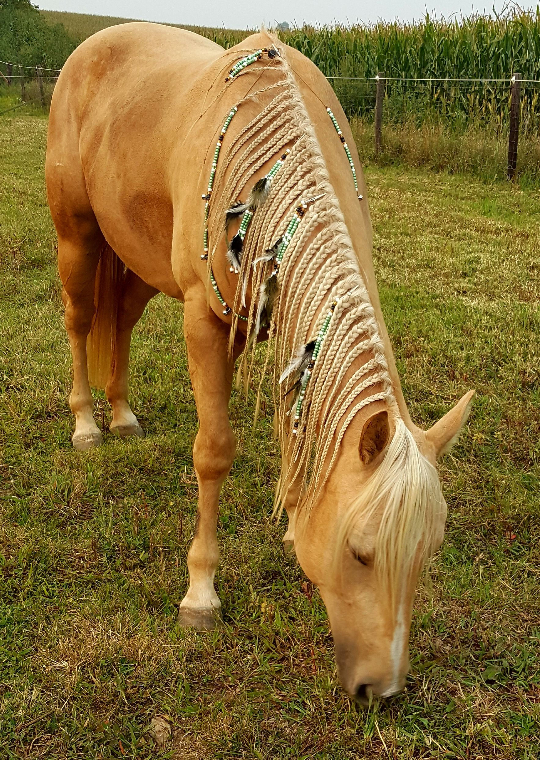 Add Rhythm To Your Ride Visit Rnb S Online Store At Www Rhythm N Beads Net With 100 Designs To Choose From As Well Horse Braiding Horse Hair Horse Mane
