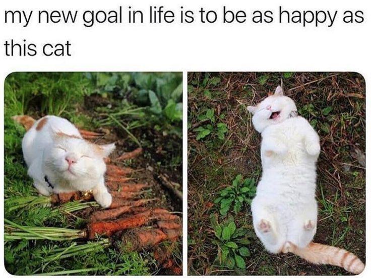 32 Wahnsinnig süße Katzen-Meme, um am Samstag den richtigen Weg einzuschlagen – Tier-Blog
