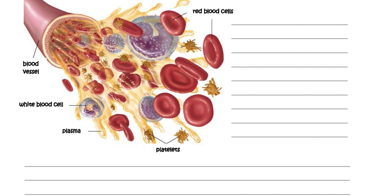 Bloodpdf circulatory system diagram pinterest pdf and circulatory system bloodpdf ccuart Images